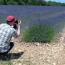 Fotogener Lavendel (Luberon)